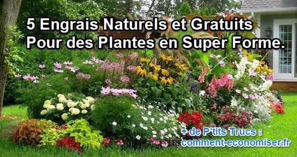 Vous voulez que vos plantes restent en pleine forme et poussent facilement ? Pour cela, pas la peine de dépenser des sous en achetant des sacs d'engrais. Découvrez 5 engrais gratuits et naturels que vos plantes vont adorer :  Découvrez l'astuce ici : http://www.comment-economiser.fr/engrais-naturels-gratuits-plante-en-forme.html?utm_content=buffer99bc2&utm_medium=social&utm_source=pinterest.com&utm_campaign=buffer