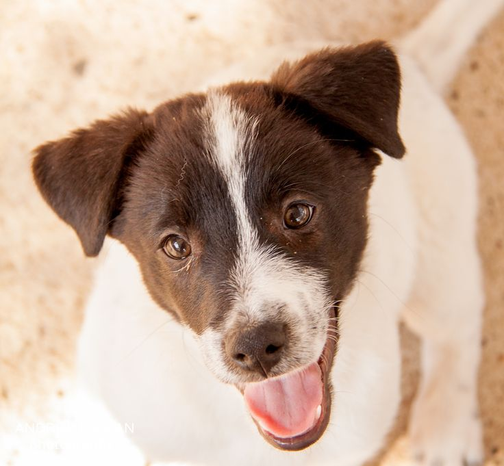 My Time As A Volunteer At The Ranch Dog Shelter (Mexico)