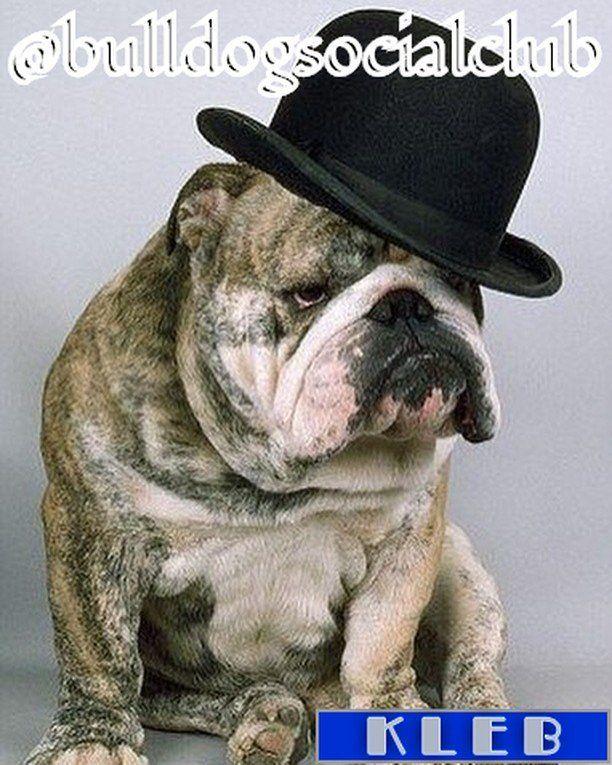 #allenglishbulldogs #theenglishbulldogs #pinterest #family #englishbulldogs #englishbulldogsofig #englishbulldogsof https://t.co/JgHojtGhX7
