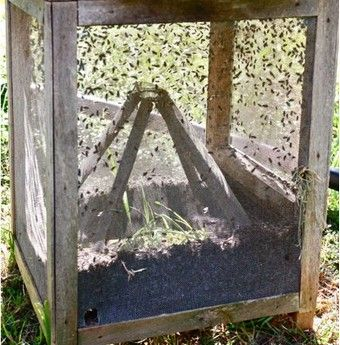 Build the Cadillac of Fly Traps for a Fly-Free Summer  also check out to see more info...http://chestofbooks.com/home-improvement/woodworking/Community-Shop-Projects/Fly-Trap.html#.USaGtDene5E