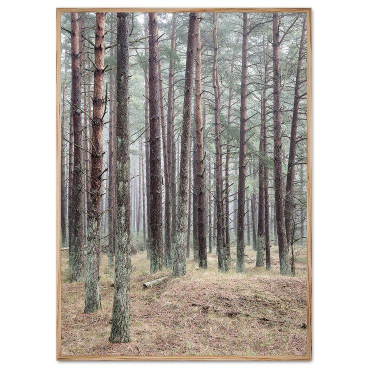Plakat affyrreskov på Læsø.Danmark plakaten med fotokunst viser den fantastisk natur fyrreskoven udgør. Se plakaten her!
