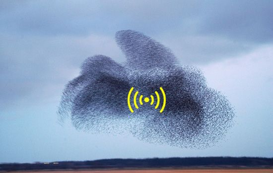 Swarms of wifi-enabled flying robots are being tested to establish emergency rescue networks following natural disasters. The swarming behavior of the robots are based on insect movements.