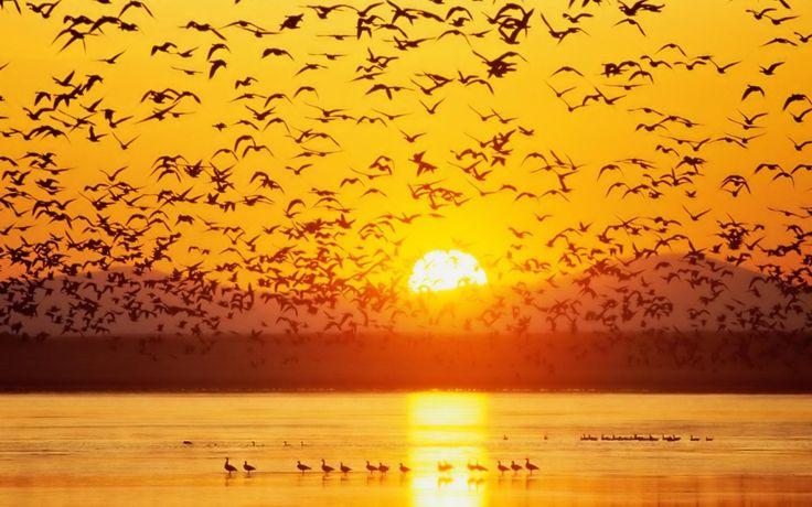 Lake sunset with birds
