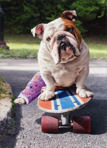 best 25  broken leg ideas on pinterest