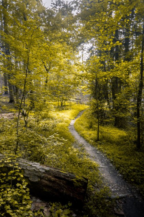 whoisjacobjoyner:    Into the Forest - Raleigh North Carolina