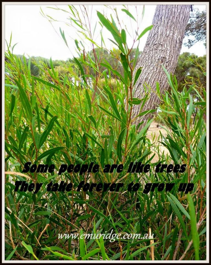 Some people are like trees, they take forever to grow up #kangaroo #island