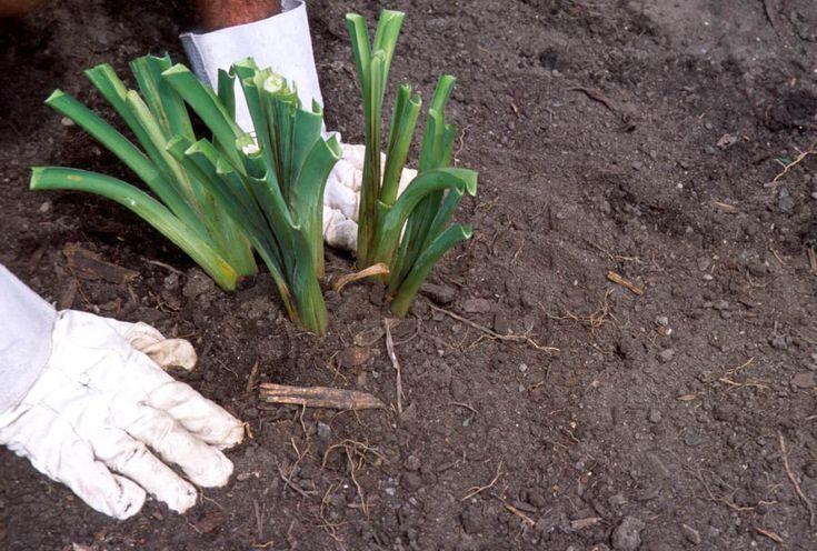 La fertilité du sol