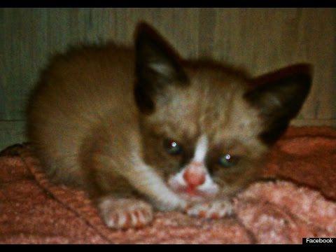 Grumpy Cat as a Kitten! - YouTube
