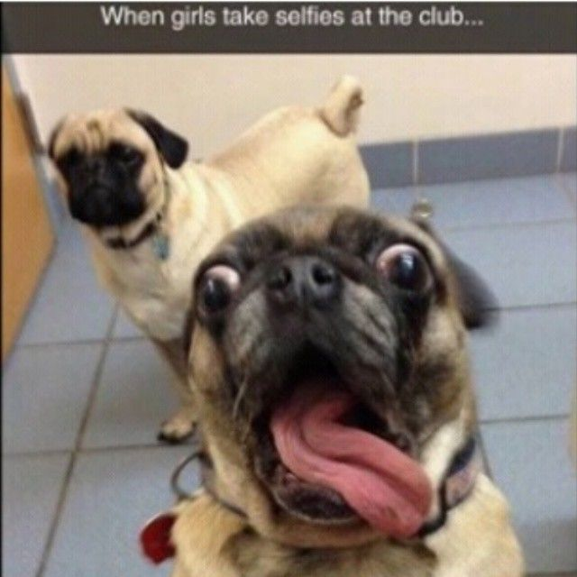 Best Selfies D Images On Pinterest Funny Animals Funny - 17 funniest animal selfies