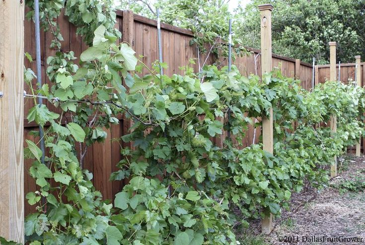 Simple Grape Arbor Plans Woodworking Projects Amp Plans
