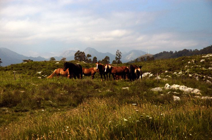The wild horses of Cantabria!