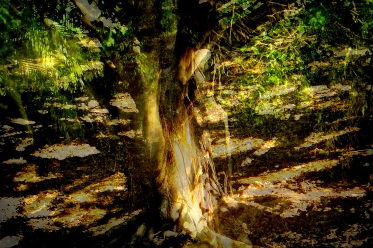 """The photo that inspired the first painting...""""the Women of the Tree""""."""