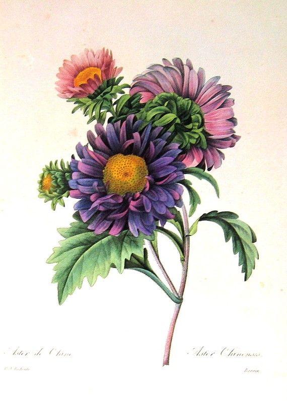 September birth flower aster                                                                                                                                                                                 More