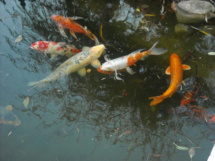 Fish:)