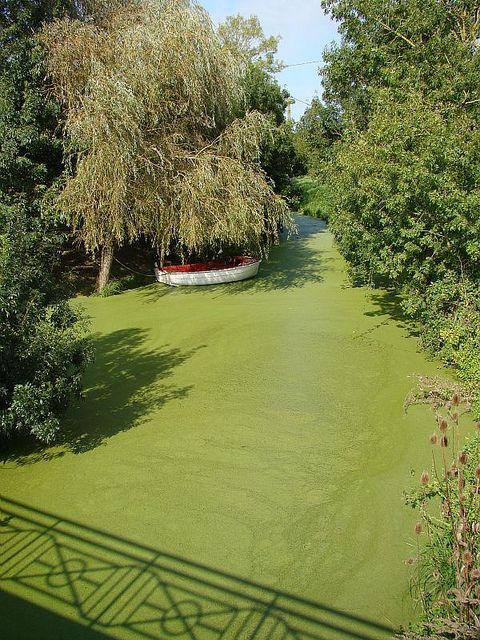 Green Venice channel http://www.visit-poitou-charentes.com