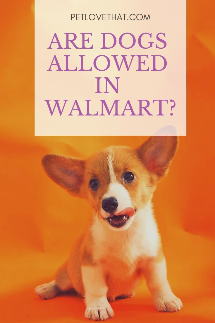 Specific Rules Are Under Review To Accommodate More Pet Owners And Their Pets But There Are Also Those Stores Which Are Upho Dogs Stores That Allow Dogs Pets