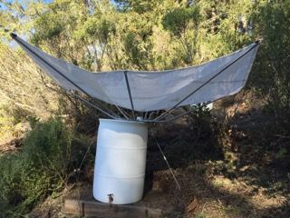 """Customer in California uses this 84"""" RainSaucer with multiple barrels on a hillside. She moves the RainSaucer from barrel to barrel as each one gets filled during the rainy season. The plan is to use the water during the dry Summer with pressure provide by gravity."""