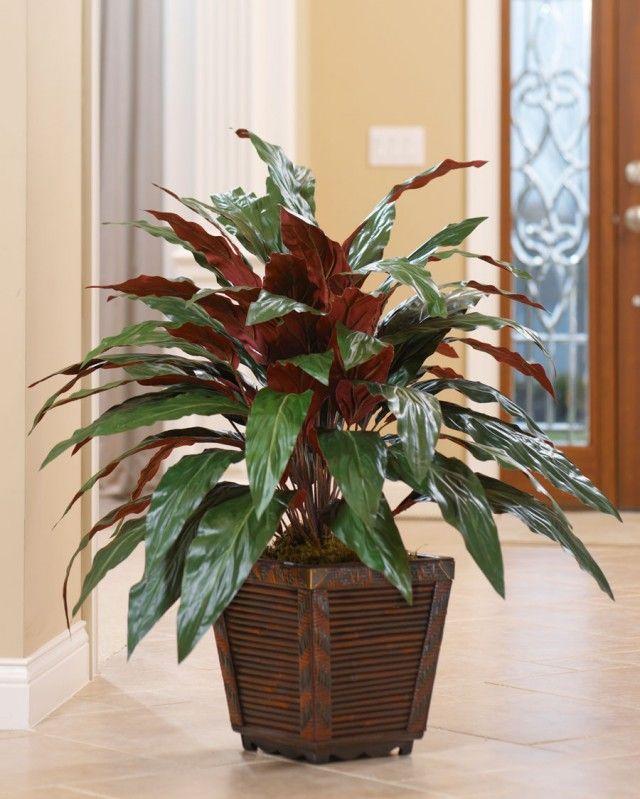 Лучшие неприхотливые растения для офиса 5 Аспидистра (Aspidistra)