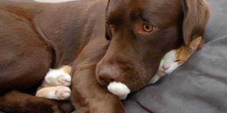 Estas imágenes son para compartir con todo el mundo. La número dos casi me mata de la risa. Estos gatos son fenomenales.