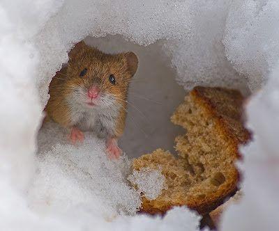 Bij Tante Jo: Dieren in de sneeuw..........