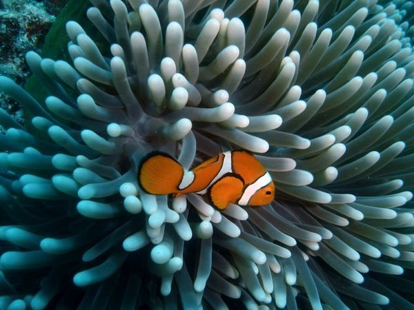 Great Barrier Reef | Environmentalists await results of UN Great Barrier Reef study | Asia ...