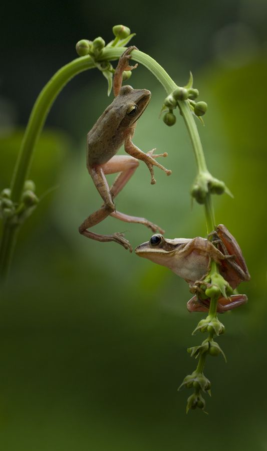 .frogs are my favorite animal