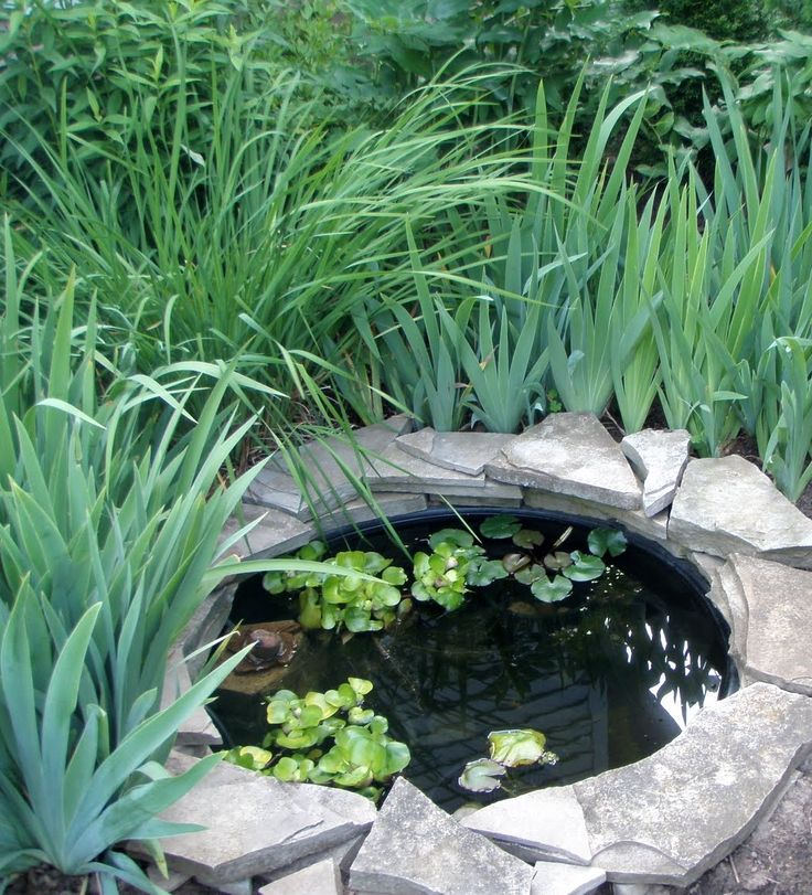 13 Best Images About Water Gardening With Fish On Pinterest Goldfish Pond Aquarium Heater And