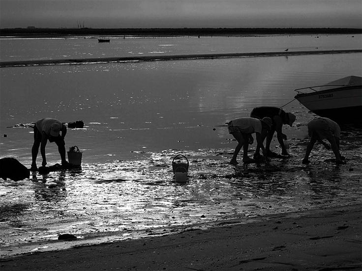 Mariscadores da Ria Formosa