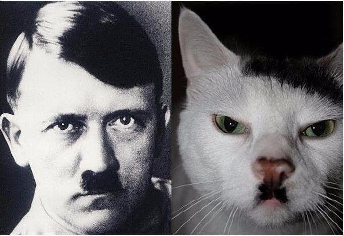 Мой кот меня пугает))