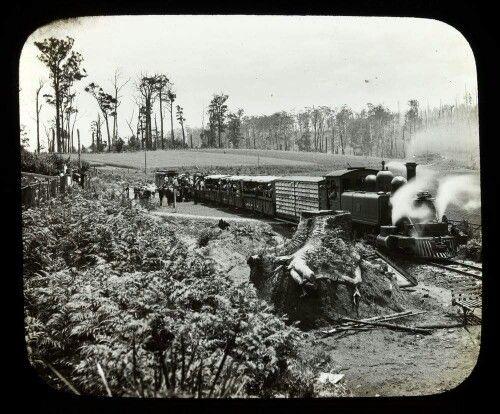Narrow gauge train Clematis vic 1902.