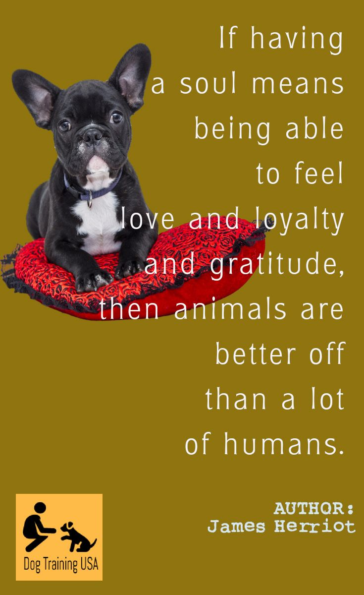 Cute Dog Quotes Dog Training Usa Cute Dog Quotes Dog Quotes