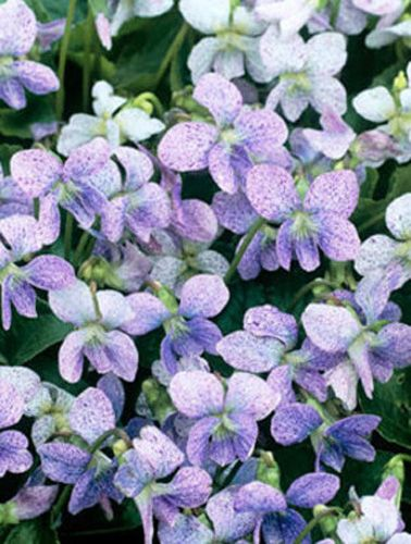 How to Find the Right Ground Cover Perennials These low-growing perennials include good choices for both sunny and shady locations, as well as options for light, moderate, and heavy traffic.