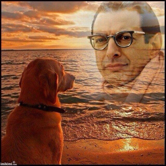 A dog stares lovingly at Jeff.