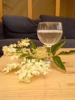 Elderflower Drink Recipes - Elderflower Lemonade, Cordial, and Champagne Recipes