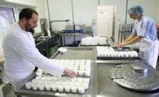 Vše o domácí výrobě sýrů. Jak na to?