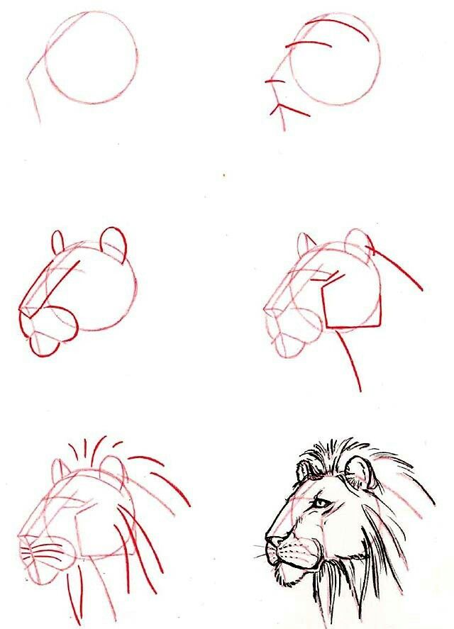 Draw 50 Animals by Lee J. Ames - Lion face (i had this book in 5th grade) #leos