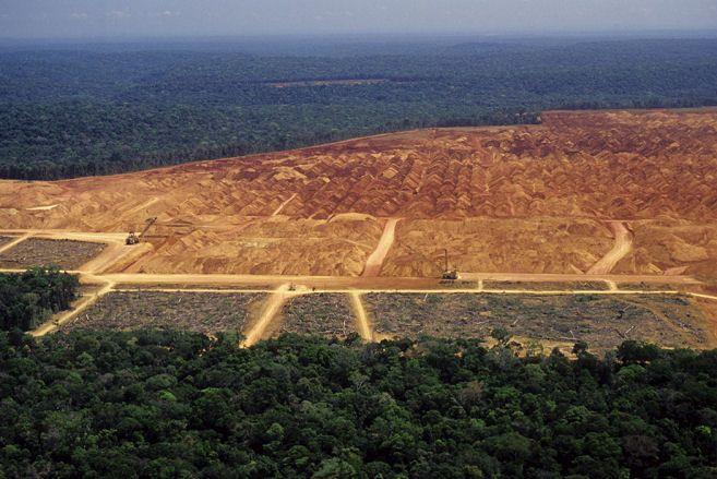 Brazil Rainforest Deforestation