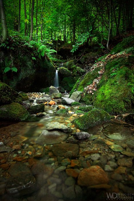 Babbling brook: Beautiful Images, Enchanted Forests, Amazing Natural, Beautiful Places, Forests Stream, Rivers Stones, Babbl Brooks, Forests Water, Waterf Forests