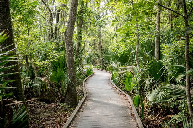Jean Lafitte National Park is a perfect way to visit a New Orleans swamp independently. The park is a gorgeous place for walking and wildlife spotting.