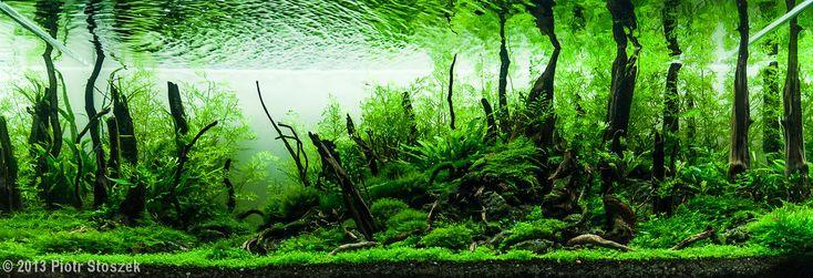 2013 AGA Aquascaping Contest - Entry #555