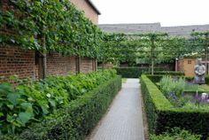 leibomen tuin met beukenhaag - Google zoeken
