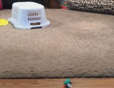 Armored Cat Prototype: Artificial Mouse Catching Test