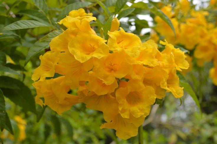 Flores de la selva.