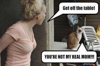 NO!!!Realmom, Funny Cat, Make Me Laugh, Funny Stuff, Humor, Real Mom, So Funny, Kitty, Giggles