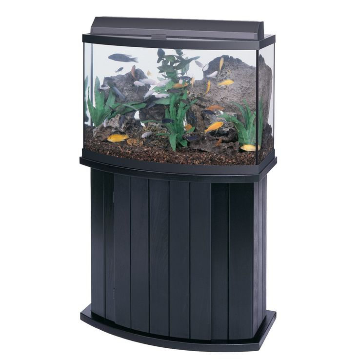 25 best ideas about all glass aquarium on pinterest for Glass fish tank