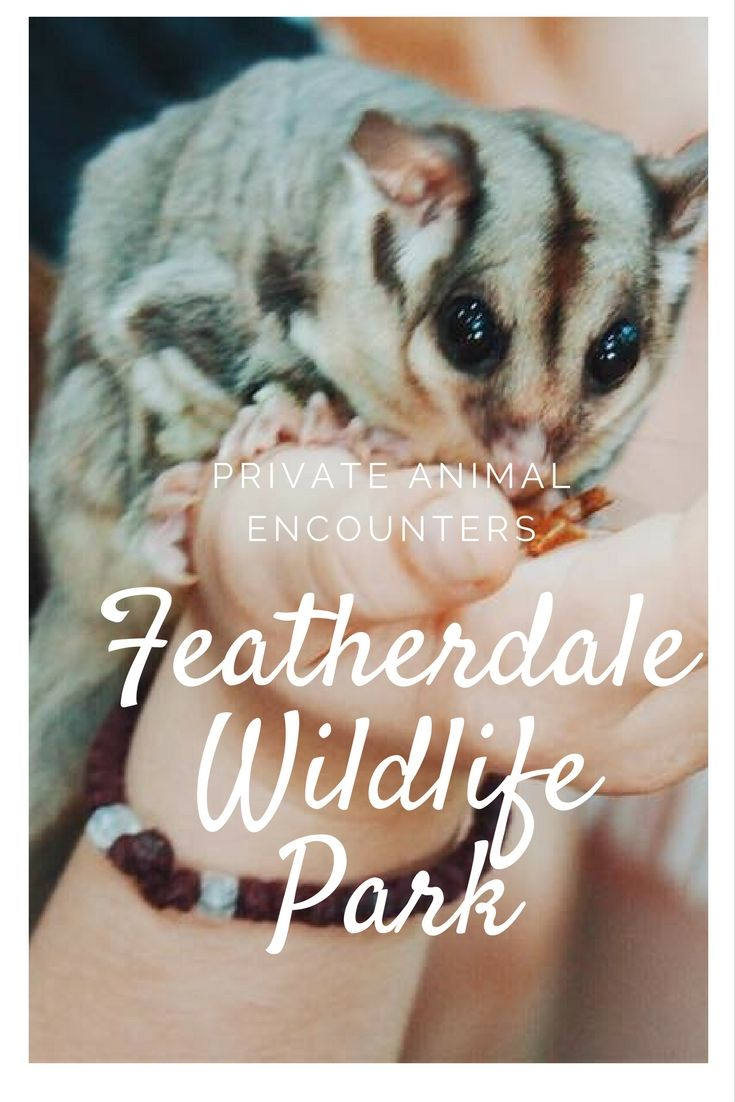 Featherdale Wildlife Park : A Private Animal Encounters
