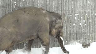 Zoológico de Oregon é atingido por nevasca e os animais parecem estar gostando | HypeScience