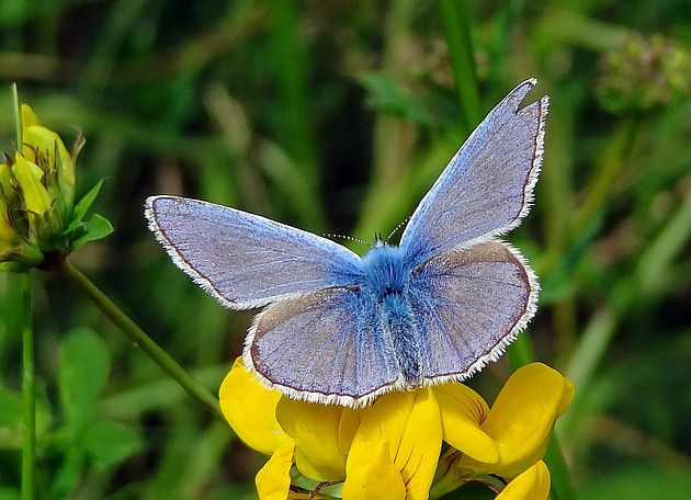 77 Best Butterflies Images On Pinterest