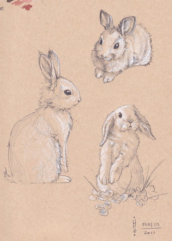 rabbit sketch bing images