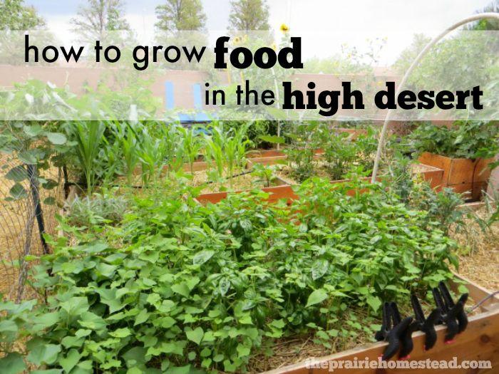6 Tips for Successful Desert Gardening on The Prairie Homestead at http://www.theprairiehomestead.com/2015/05/desert-gardening.html